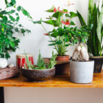 air quality house plants